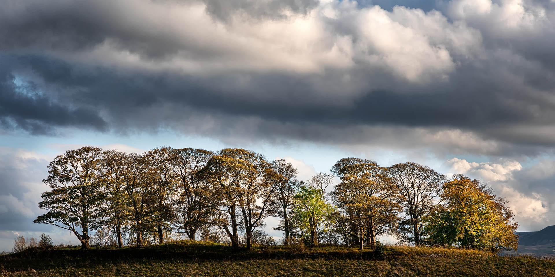 Norman Dodds - Cammo Landscape